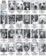 dogs-for-adoption-10-2