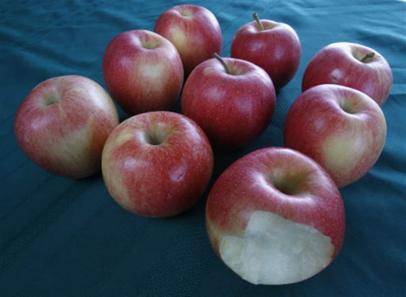 apples-autumn-fruit-sensation