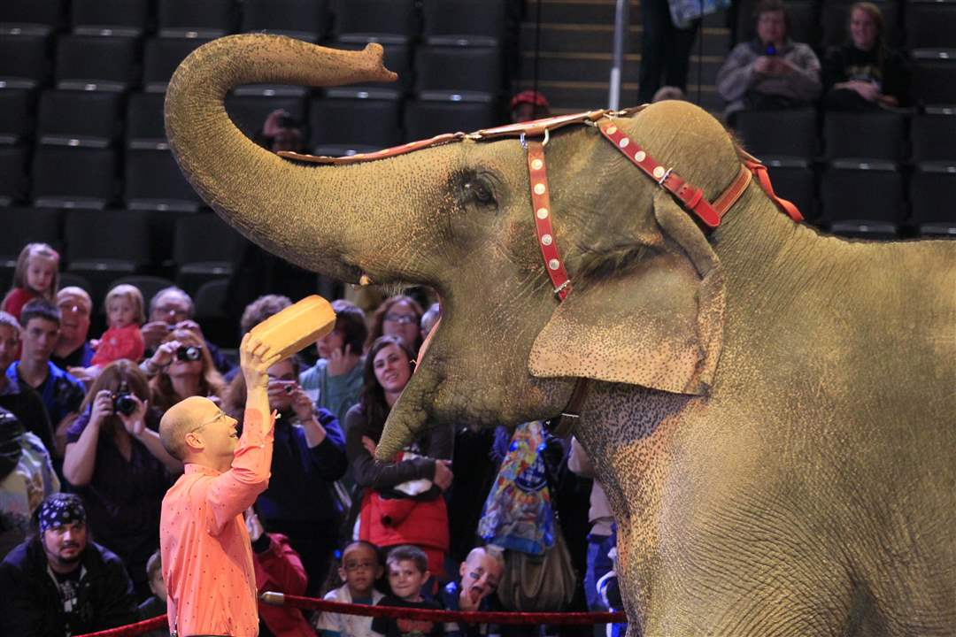 Circus-Ryan-Henning-feeds-Asia-the-elephant