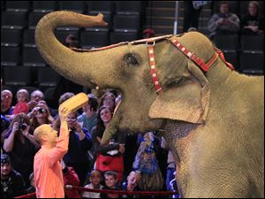 Ryan Henning of the Ringling Bros. and Barnum & Bailey Circus feeds a loaf of bread to Asia the elephant.
