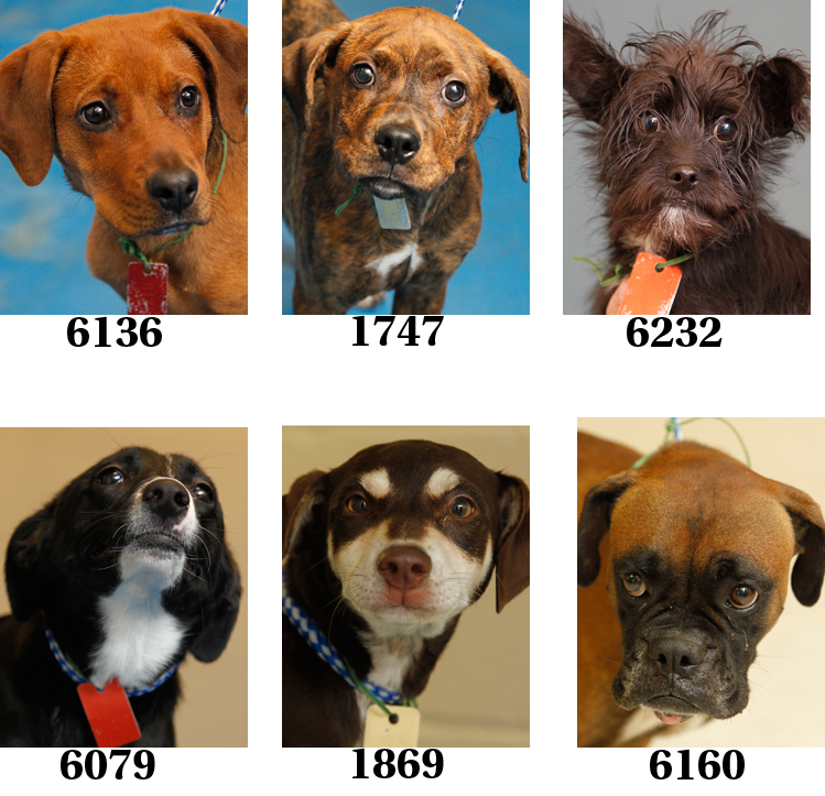 Lucas County Dogs For Adoption: 10-27