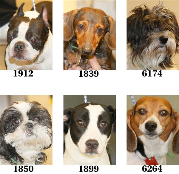 Lucas County Dogs For Adoption: 11-04