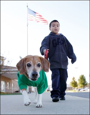 First-grader Lupe Hernandez takes Tucker for a walk at Bennett Venture Academy.