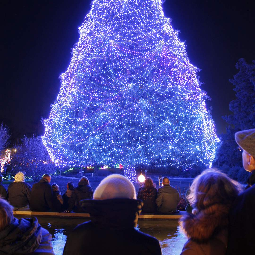 Visitors-watch-as-a-85-foot-Norway-Spruce-with-35-000-lights-is-lit