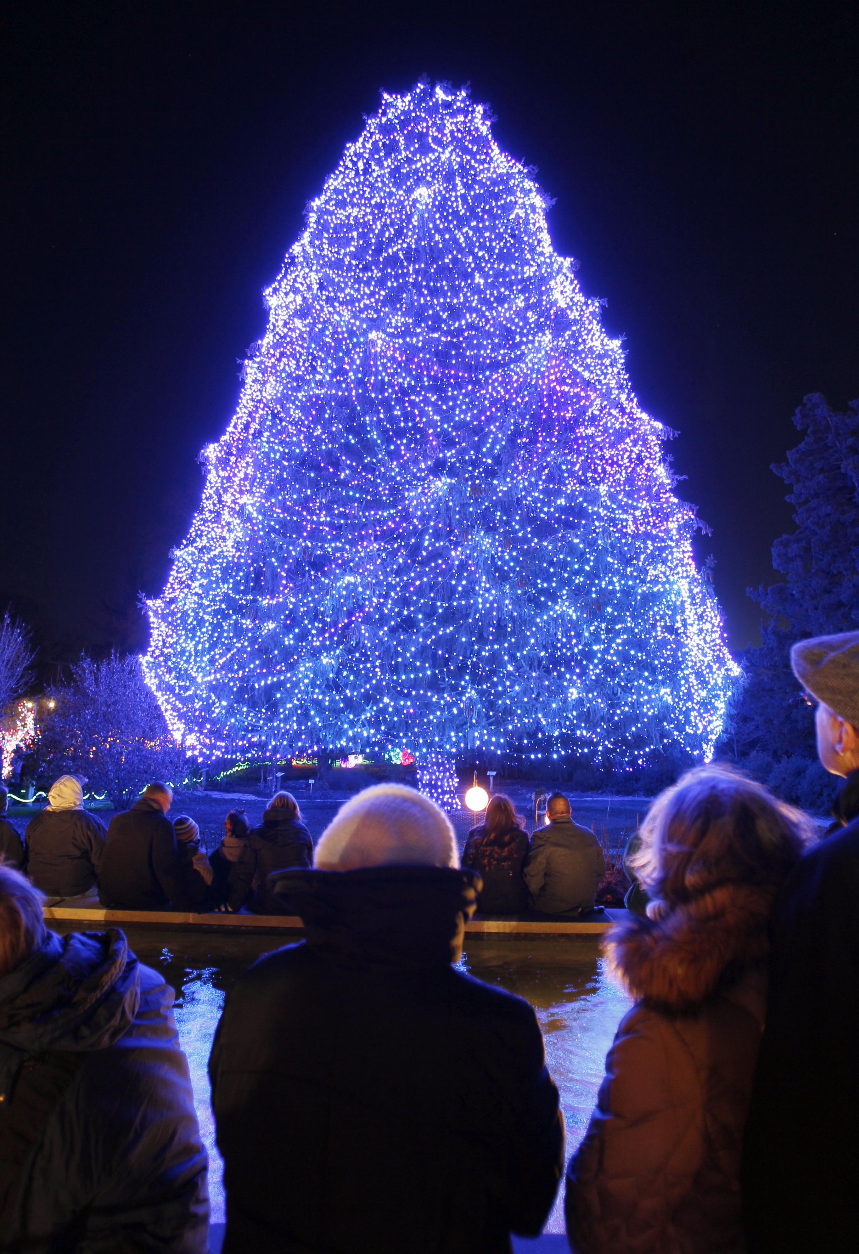 lights before christmas lights up toledo zoo the blade - Lights Before Christmas Toledo Zoo
