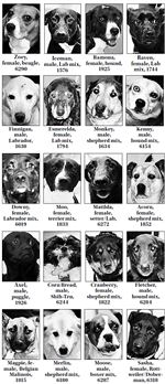Lucas-County-Dogs-11-20