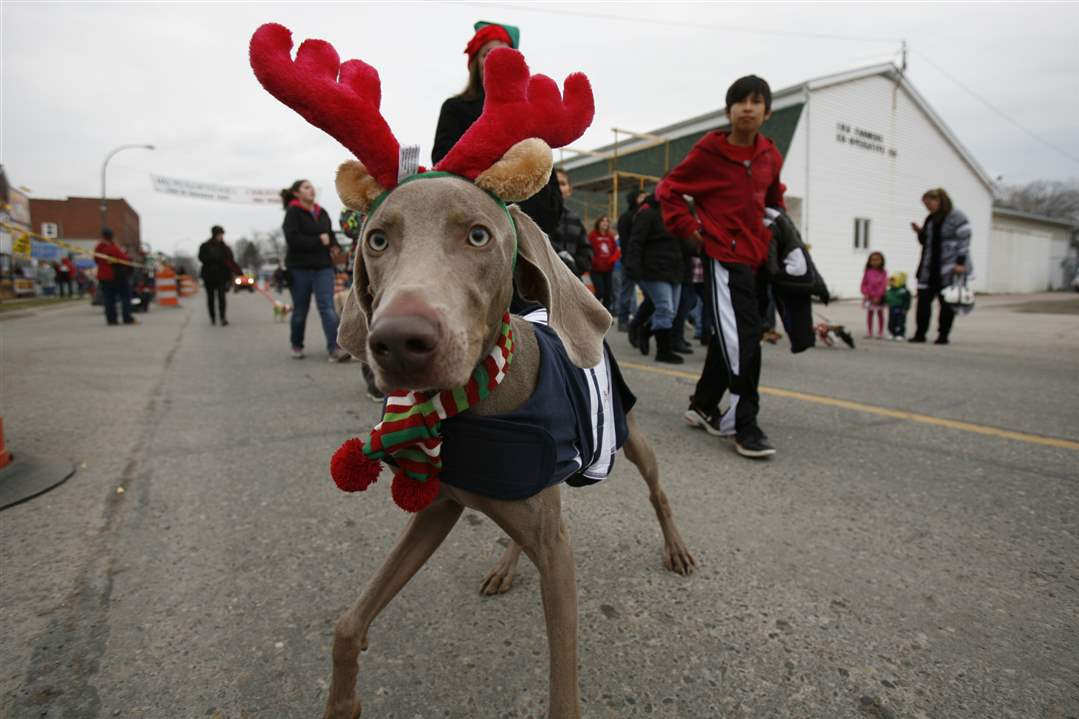 A-dog-dressed-as-a-reindeer-prances-along