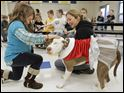 Elyse Griffin, 6, pets Callie, a pit bull being held by Michelle Lawrence, a member of the Lucas County Pit Crew, at Whiteford Elementary School.