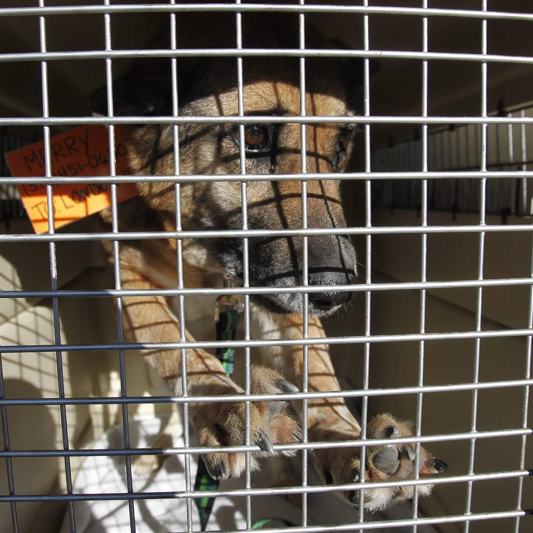 A-dog-is-caged-during-its-trip-to-Ontario