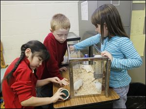 Natalie Segovia, from left, Kyle Johnson, and Gabrielle Grove care for their kindergarten class' gerbils