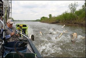 Jim Kirby, an outdoor writer from Palos Park, Ill., prepares to shoot Asian silver carp as they start jumping alongside his boat during a bowfishing trip in 2006, near Utica, Ill.