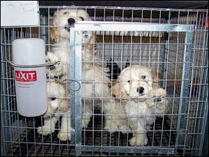 The Coalition to Ban Ohio Dog Auctions says many sellers have convictions for animal cruelty. These pups were among more than 1,100 at one breeding operation in Virginia.