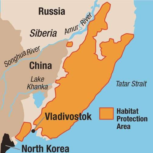 Amur River On World Map.Toledo Magazine Amur Tigers The Blade