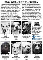 Dogs-available-for-adoption-26