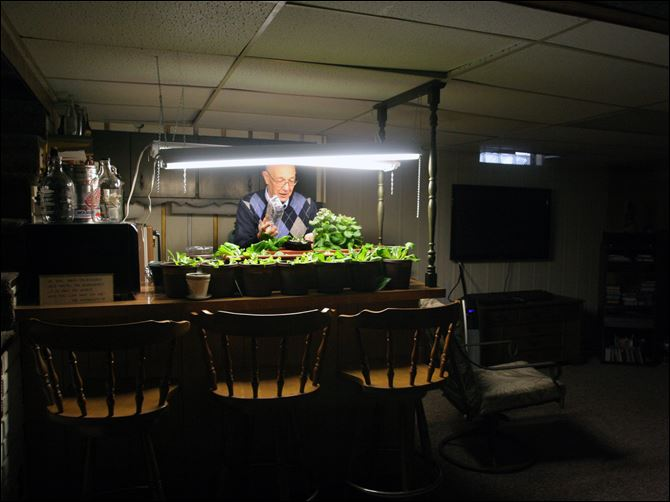 Lloyd Adelphia tends to his salad garden Lloyd Adelphia tends to his salad garden that is in the basement of his home in Toledo,OH