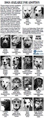 Lucas-County-Dogs-3-11