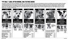 Pit-Bull-label-often-wrong-DNA-testing-shows