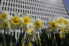 flowers-government-center