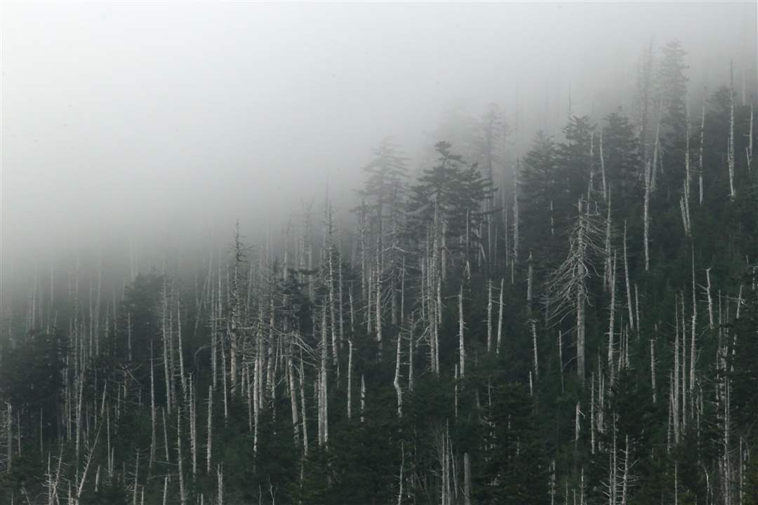 Smoky-Mountains-mist-trees