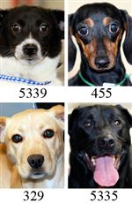 Lucas-County-Dogs-3-31