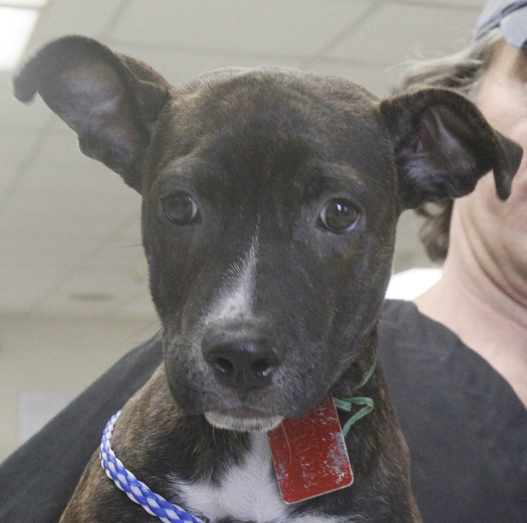 lucas county dogs for adoption  4-03