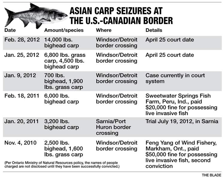 Asian-carp-seizueres-at-the-U-S-Canada-border