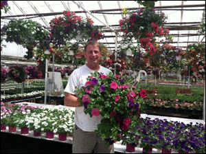 Mike Abernathy, general manager for Whiteford Greenhouse in Sylvania Township, holds a hanging basket of flowers inside Whiteford Greenhouse. Hanging baskets are a good April option for gardeners.