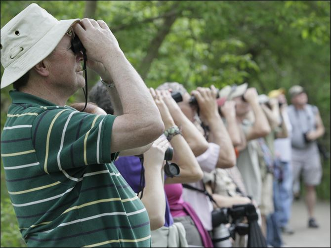10-day festival takes wing in Oak Harbor  Will Stacer of Livonia, Mich., left, and several other birders  line the Magee Marsh Bird Trail. Enthusiasts from across the country and beyond flock to the area to view the migration of thousands of songbirds.