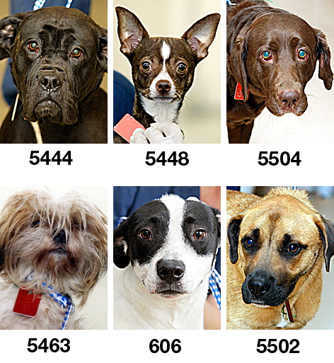 Lucas County Dogs For Adoption: 5-09