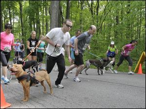 Bruce Zolla, of Toledo, [in front row at left, with shades] [#1241] and Nava, a friend's dog, at the start of the 5K with dog race. The Lucas County Pit Crew holds their first 'Run with the (Pit) Bulls', a 5K race in Secor Metropark in Sylvania, Ohio on May 12, 2012.