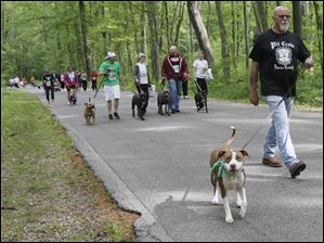 Karley, left, and Jeff Lowe, of Toledo, along the 5K walk. The Lucas County Pit Crew holds their first 'Run with the (Pit) Bulls', a 5K race in Secor Metropark in Sylvania, Ohio on May 12, 2012.