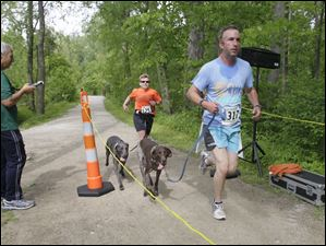 Toledo Roadrunners members Edward O'Reilly, of Maumee, left, and Ray Montague, of Oregon, obscured, are the timers as Jay Matthews, of Toledo, and his dog Rocco cross the finish line forst in the runners with dog category. Coming in right behind them are  Erin Anderson, of Holland, and Otis. The Lucas County Pit Crew holds their first 'Run with the (Pit) Bulls', a 5K race in Secor Metropark in Sylvania, Ohio on May 12, 2012.
