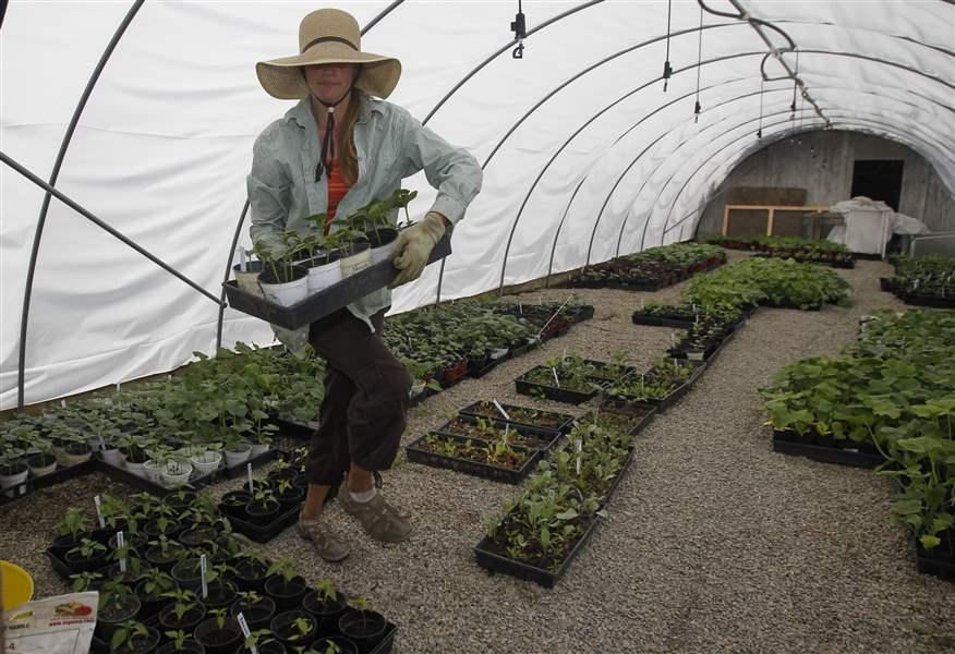 Как садить огород в сибири и когда