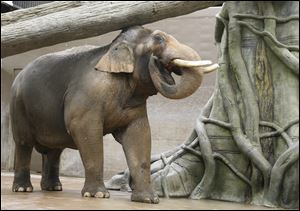 Hank the elephant at the Columbus Zoo.