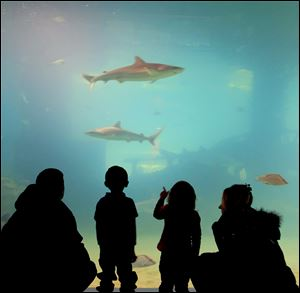 A family watches as sharks swim a few feet away in a tank at the Greater Cleveland Aquarium.