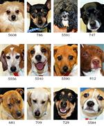 Dogs-for-adoption-5