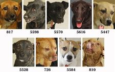 dogs-for-adoption-5-31