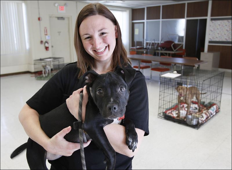 Harriet, a 4-month-old 'pit bull'-type dog that is up for adoption