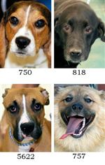 Dogs-for-Adoption-609