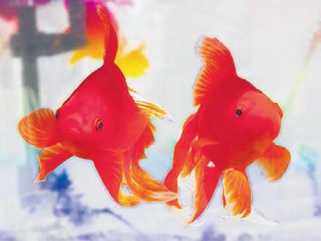 Aquaponics provide fish plants a symbiotic relationship for Best fish for hydroponics