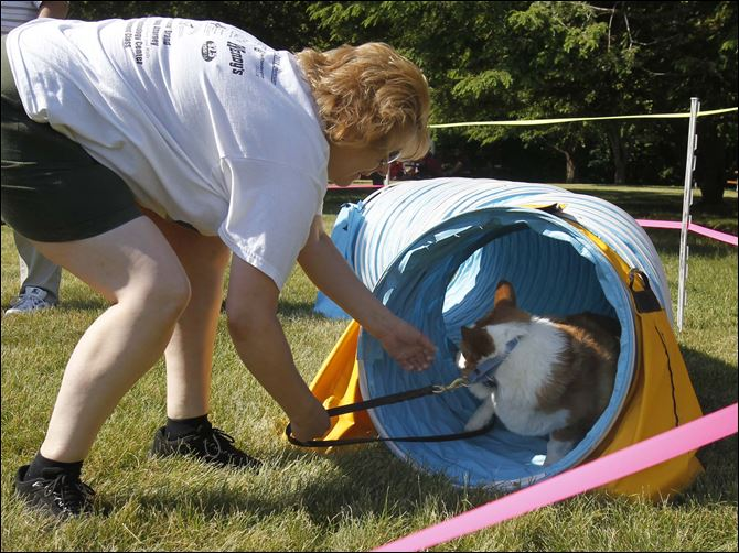 Valerie Adamski tries to coax Simon out of the agility Valerie Adamski tries to coax Simon out of the agility course tunnel at the MetroBarks Fesitval. The event was among several at Secor Metropark on Saturday.