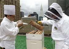Bees-cause-buzz-at-storied-New-York-hotel-2
