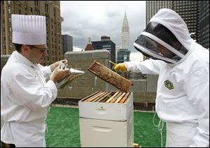 Sous chef Josh Bierman, left, and culinary director David Garcelon inspect honeybees from the hives on the 20th-floor roof of the Waldorf-Astoria hotel in New York City.