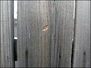 Bullet hole in the privacy fence at Remy's Gentlemans Club where Toledo Police responded to a quadruple shooting.