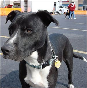 A $6,000 ASPCA grant provides a collar and ID  tag such as the one on the dog above for people who adopt a dog from the dog warden.