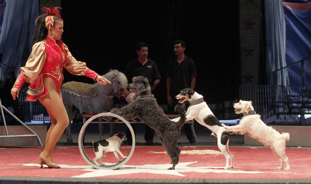 In-one-of-the-many-animal-acts-dogs-perform-tricks