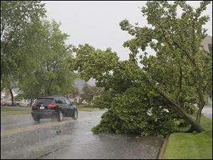 A partially uprooted tree blocks a lane on Executive Parkway in Toledo. High winds during a thunderstorm have littered the Westgate area of Toledo with branches and wind blown debris.