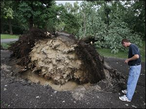 Brian Tatkowski looks at a large tree which toppled in his driveway as a result of Thursday afternoon's storms.