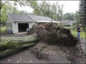 Brian Tatkowski  looks at a large tree which toppled in his driveway.