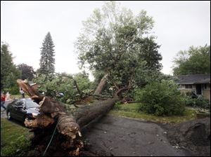 Richard Kotz begins the cleanup of downed trees near his home.
